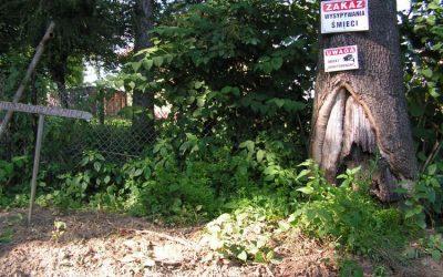 Kto zamienia stary cmentarz parafialny w śmietnik?