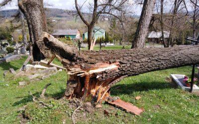 Runęło kolejne drzewo na starym cmentarzu w Lipinkach. Szkody są spore!